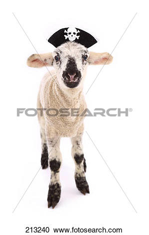 Stock Photography of Domestic sheep. Lamb standing, wearing a.
