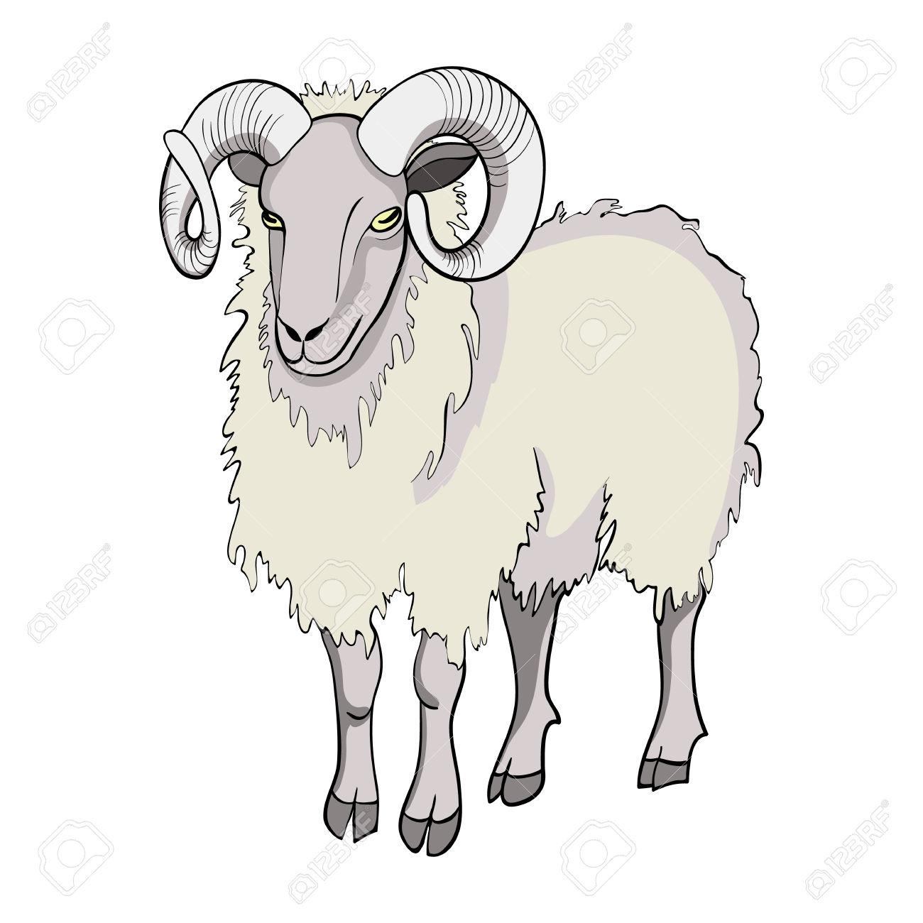 Sheep Isolated On White Background. Domestic Sheep. Symbol Of.