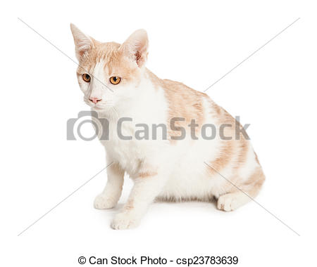 Stock Photos of Domestic Shorthair Cat sitting to side.