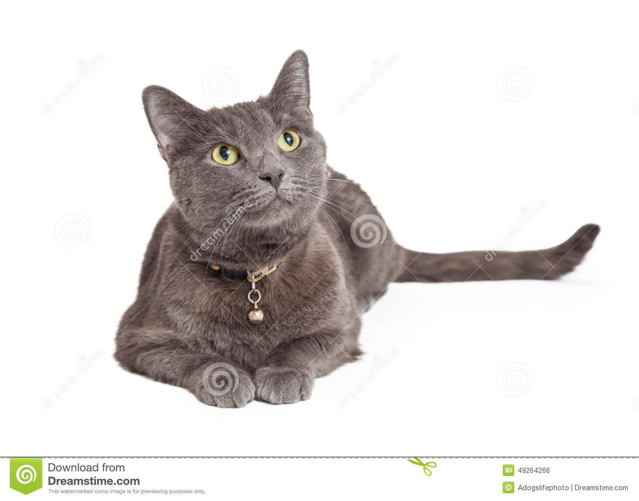 Cartoon Cats Stock Images.