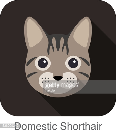 Domestic Shorthair Cat Breed Face Cartoon Flat Icon Design Vector.