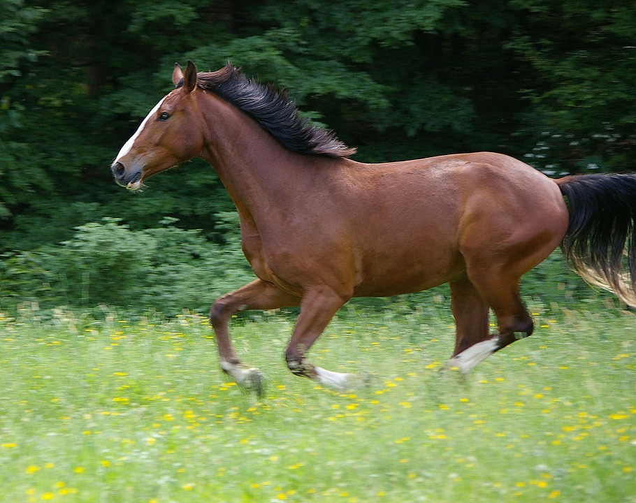 Free photo: Horse, Gallop, Animal.