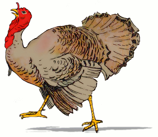 Free Domesticated Turkey Clipart, 1 page of free to use images.