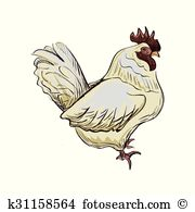 Passer domesticus Clipart and Illustration. 11 passer domesticus.