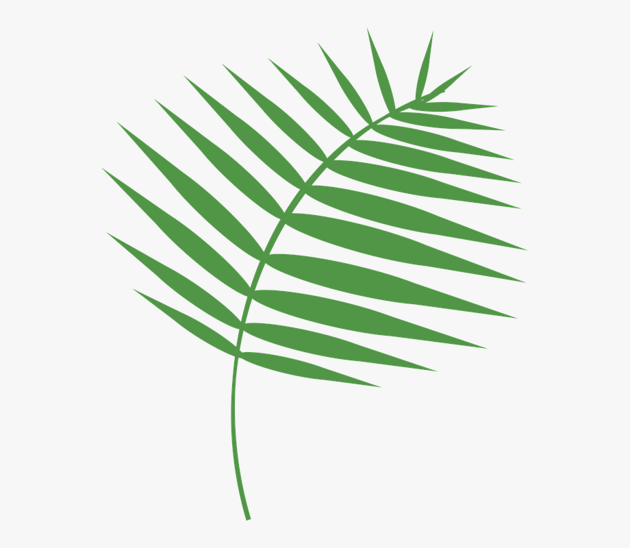 Graphic Palm Palm Sunday Holy Week Lent.