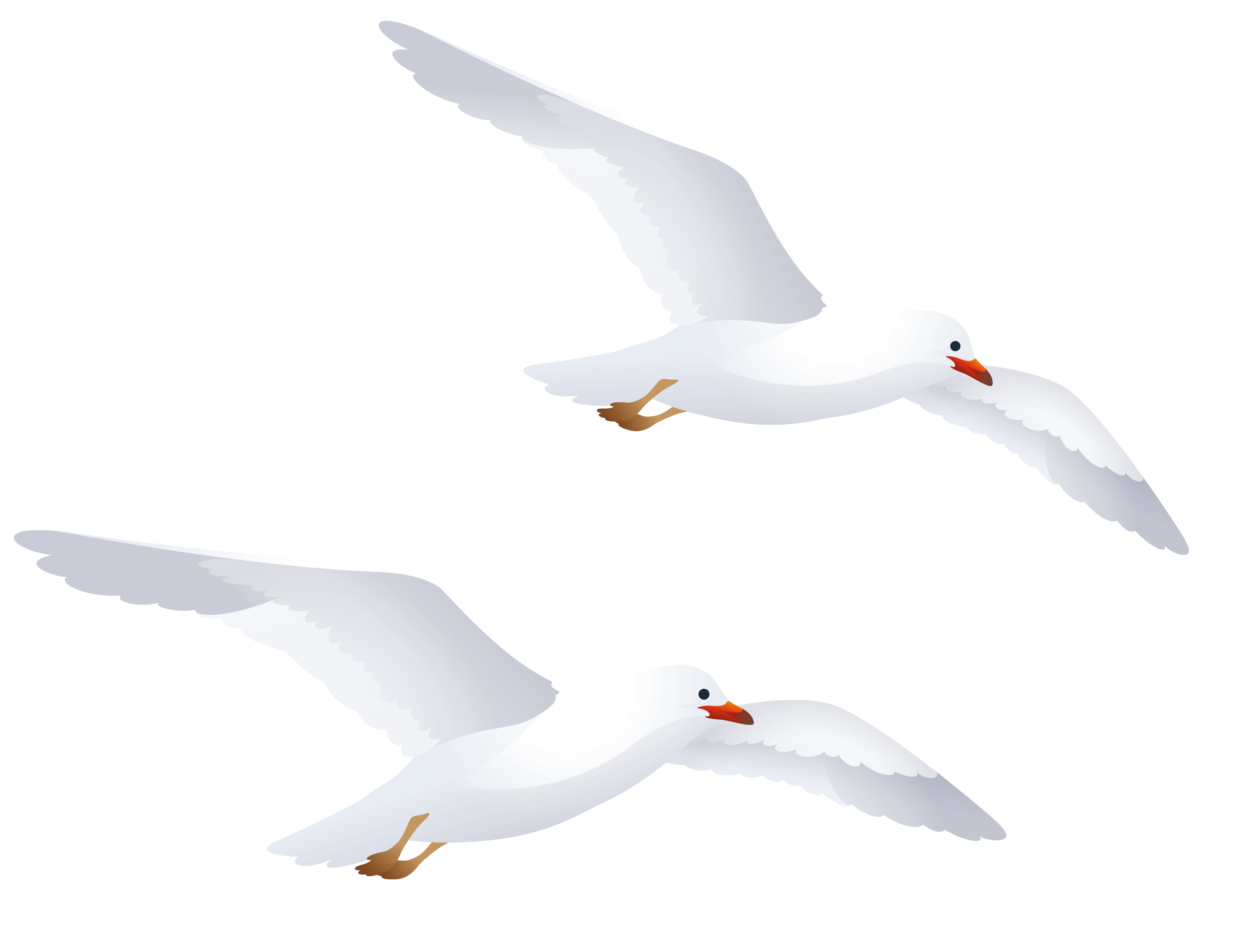 Seagulls PNG Clipart.