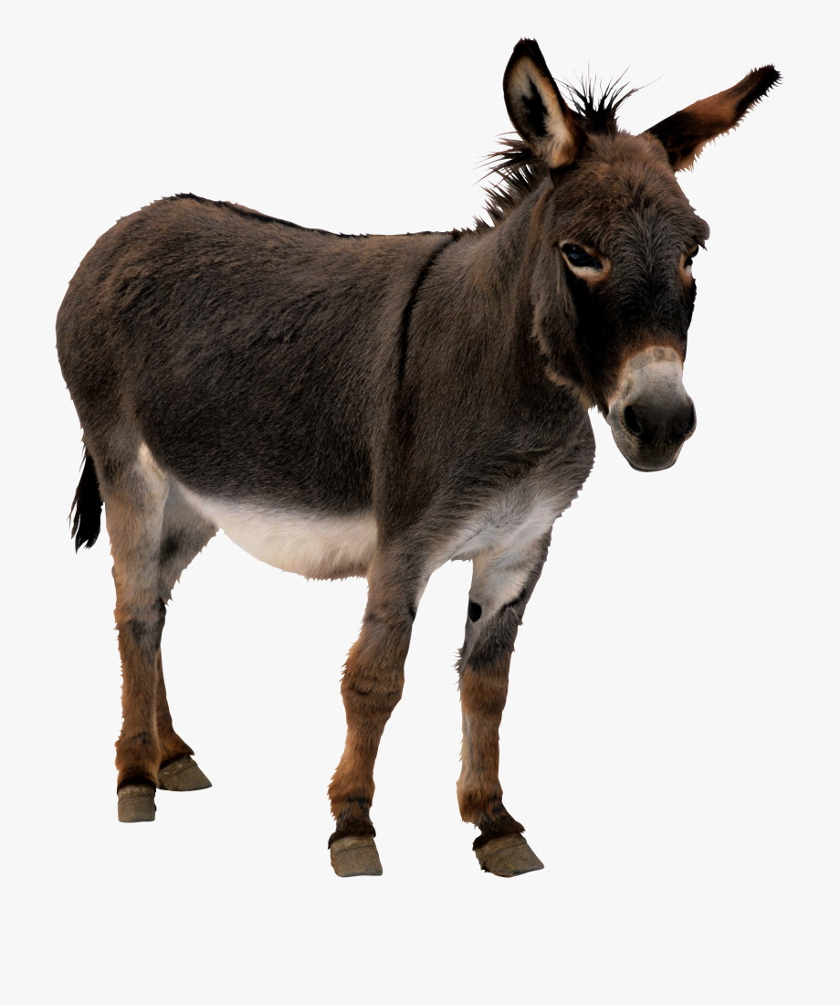 Mule Clipart Transparent Background.