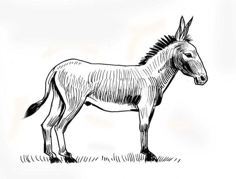Standing Donkey Stock Illustrations.