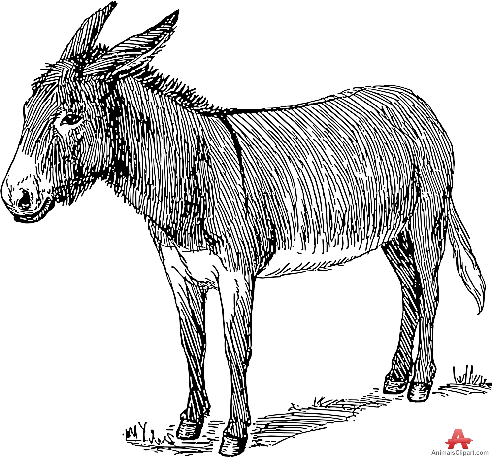 Donkey drawing free download on ayoqq cliparts.