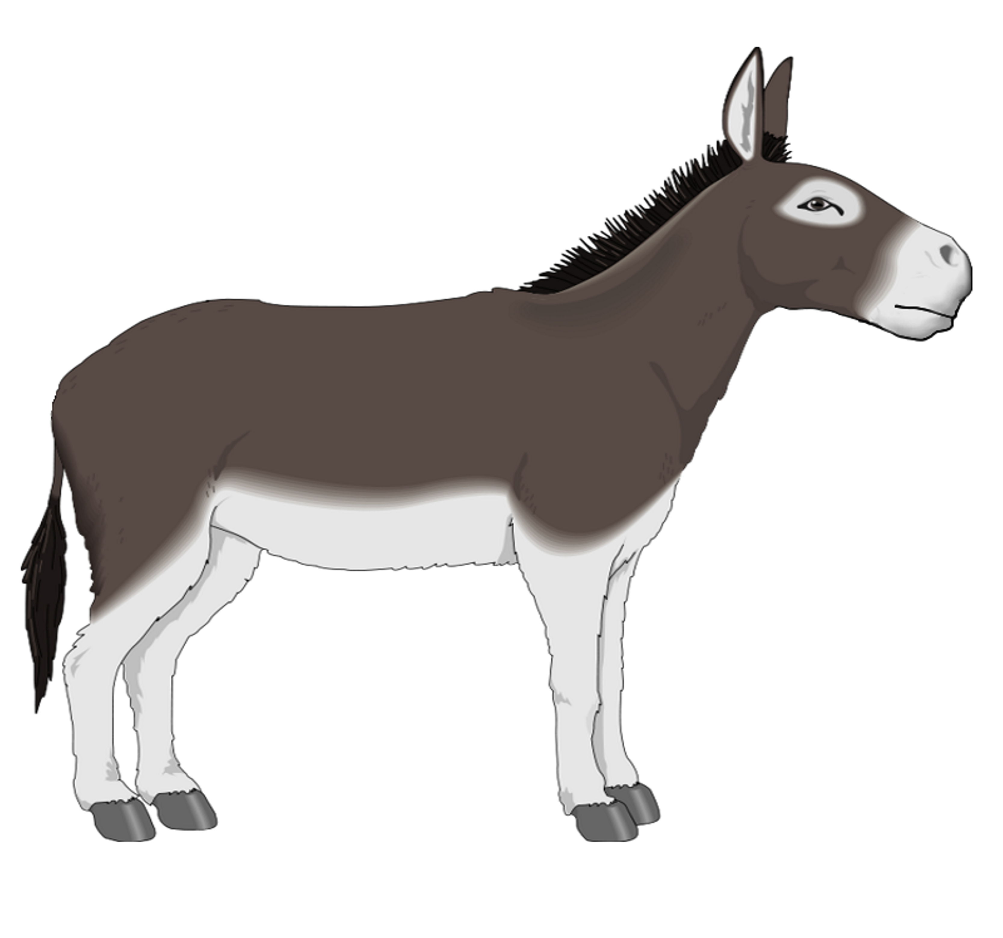 Free Donkey Clipart, Download Free Clip Art, Free Clip Art.