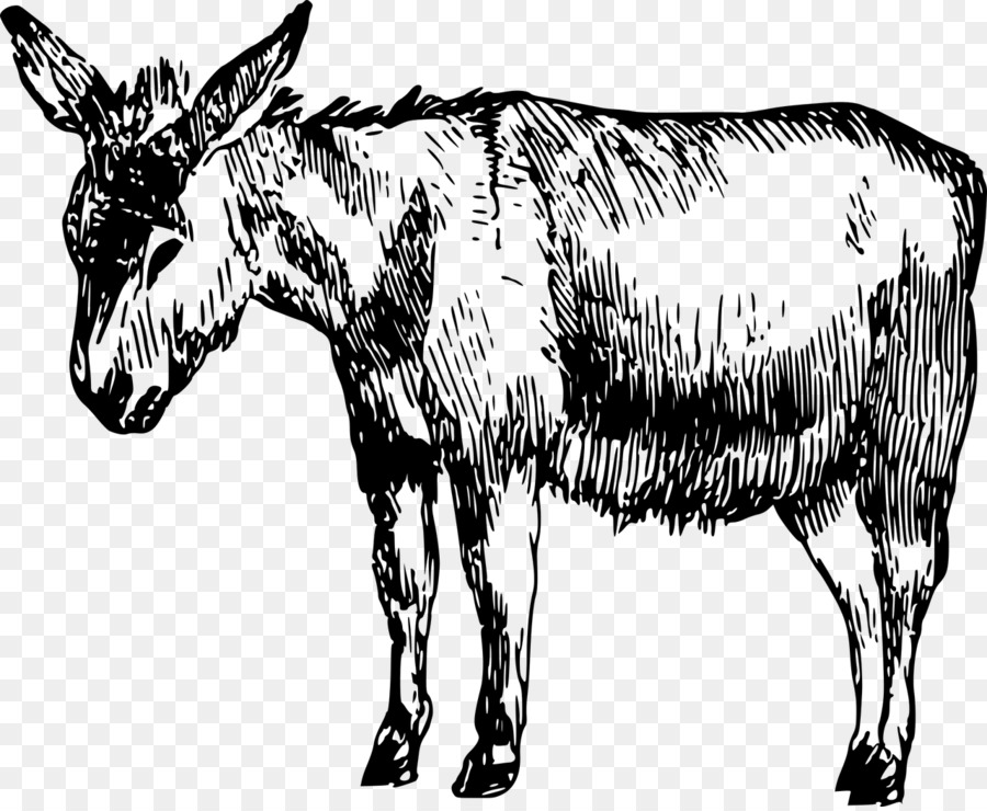 15 Donkey drawing mule for free download on ayoqq.org.