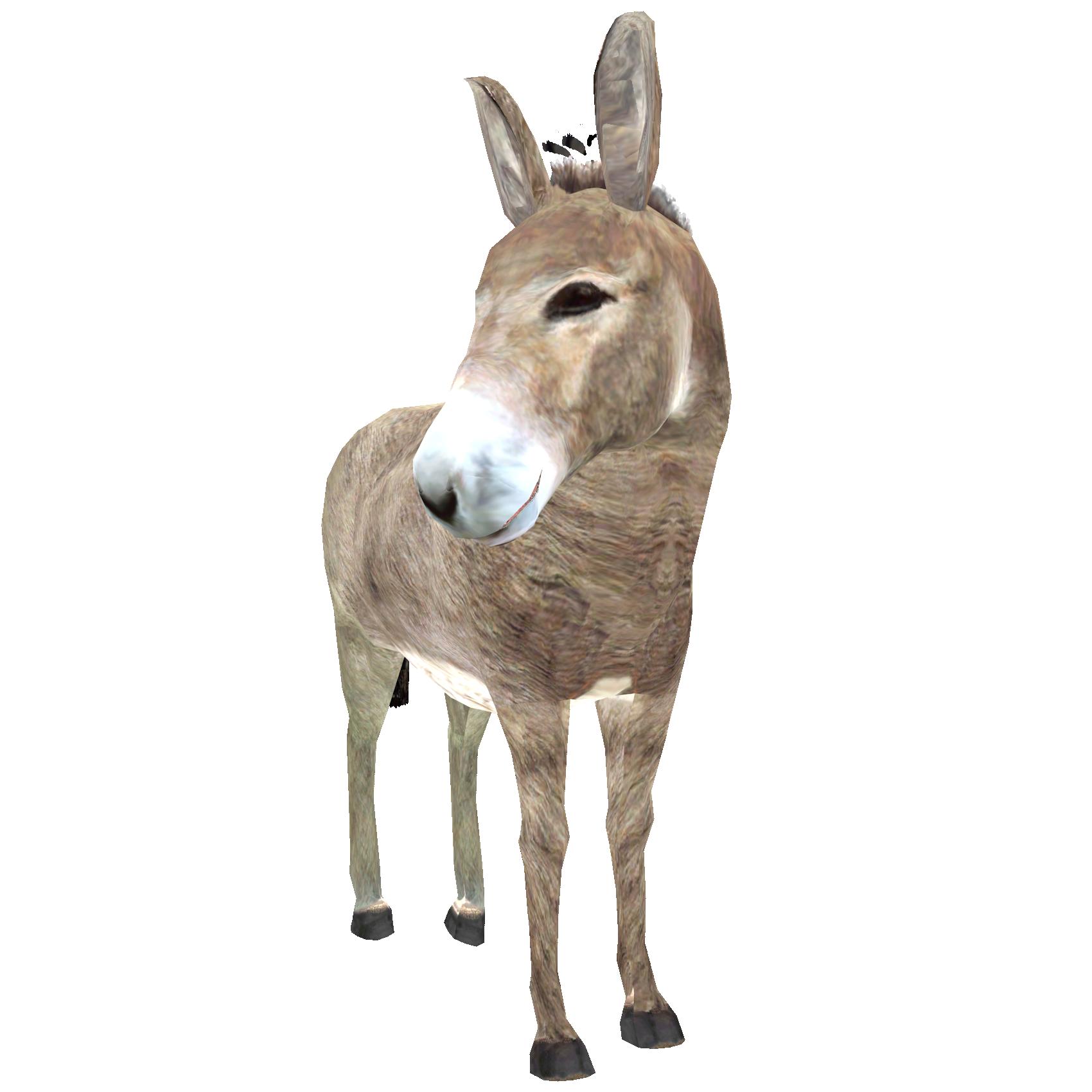 Donkey PNG High.