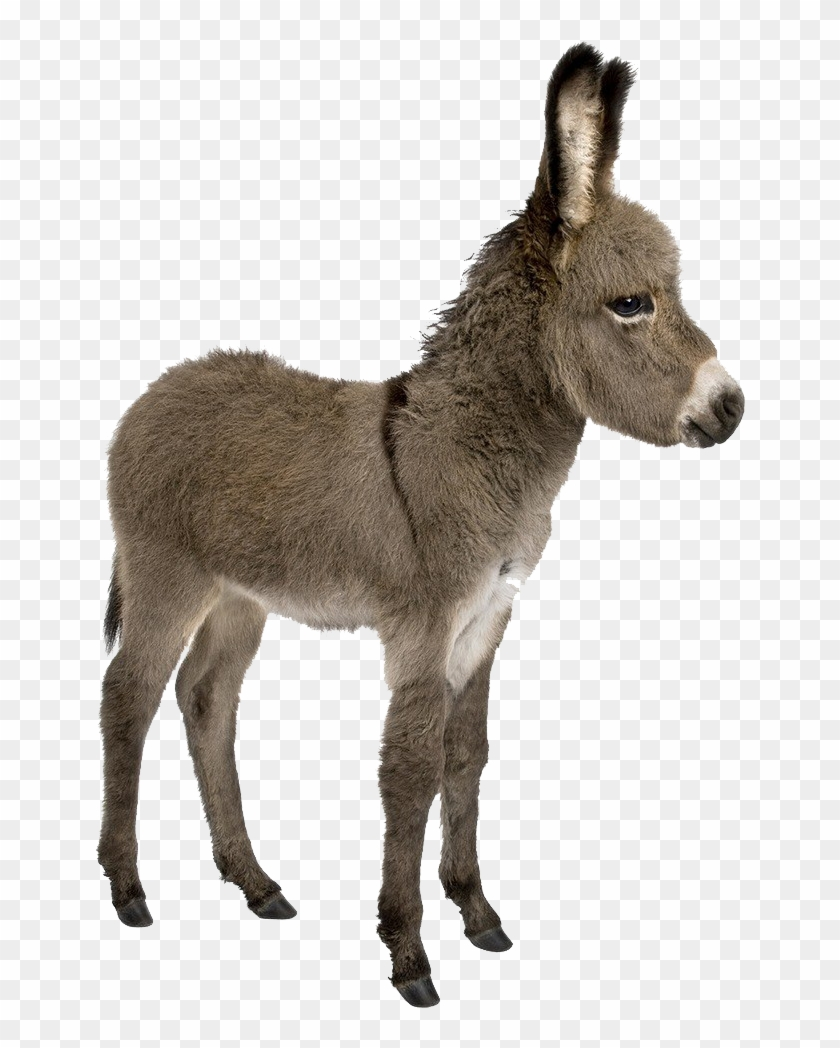 Donkey Png Images.