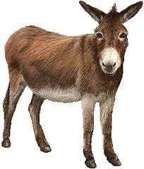 Donkey.png #32668.