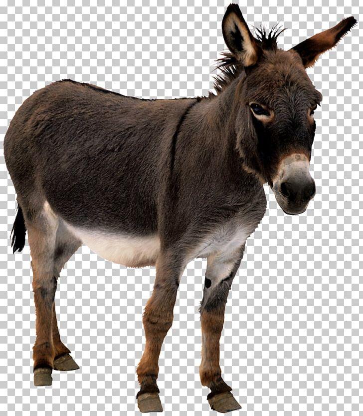 Donkey Animation Horse PNG, Clipart, Animal, Animal Donkey, Animals.