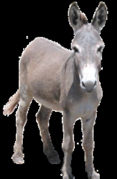 Donkey PNG Image.
