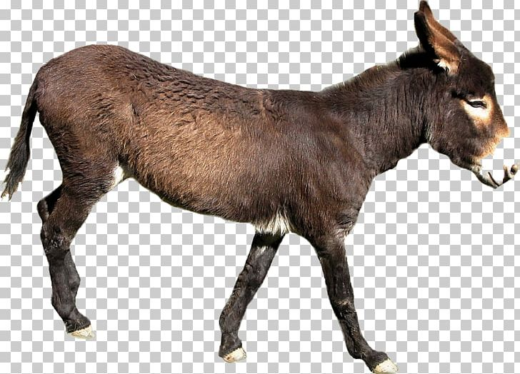 Donkey PNG, Clipart, Donkey Free PNG Download.