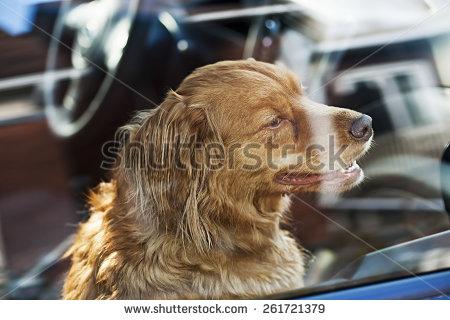 Dog locking door clipart.