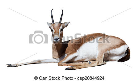 Stock Photo of gazelle over white with shade.