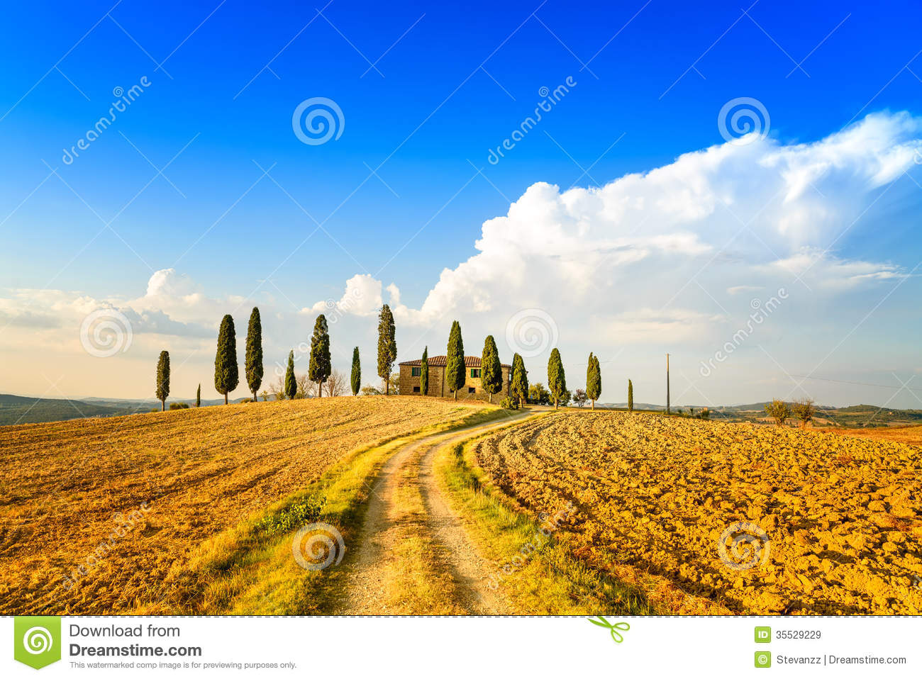 Tuscany, Farmland, Cypress Trees And White Road. Siena, Val D.