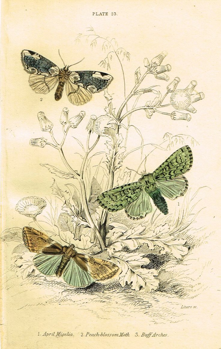 1000+ images about Botany and Entomology on Pinterest.