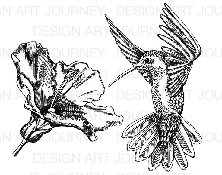 1000+ ideas about Hummingbird Flowers on Pinterest.