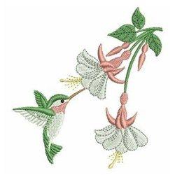 1000+ ideas about Hummingbird Flowers on Pinterest.