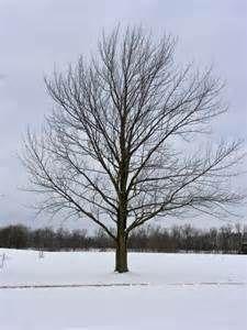 constitution tree.