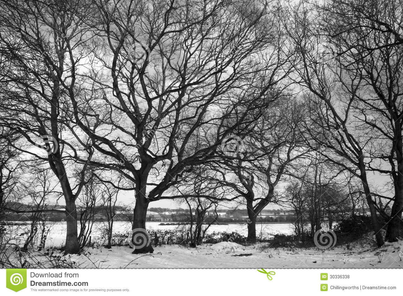 Black And White Image Of Dormant Trees In The Snow Royalty Free.