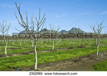 Stock Image of Agriculture.