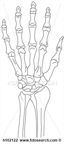Wrist And Hand Clipart.