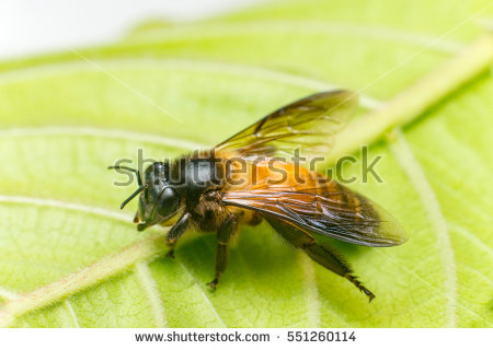 Strong Bee Stock Photos, Royalty.
