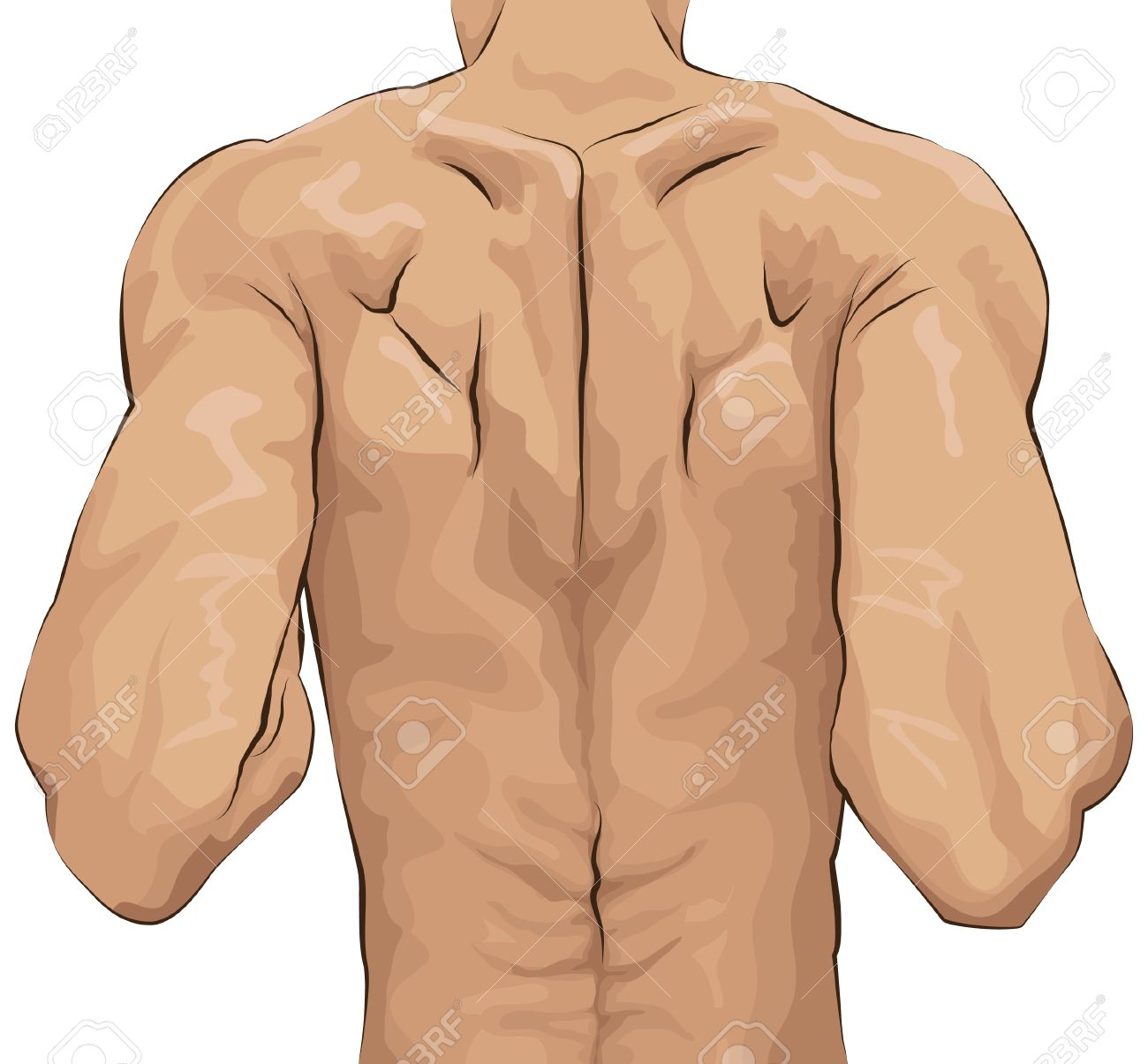 Back Muscles Clip Art.