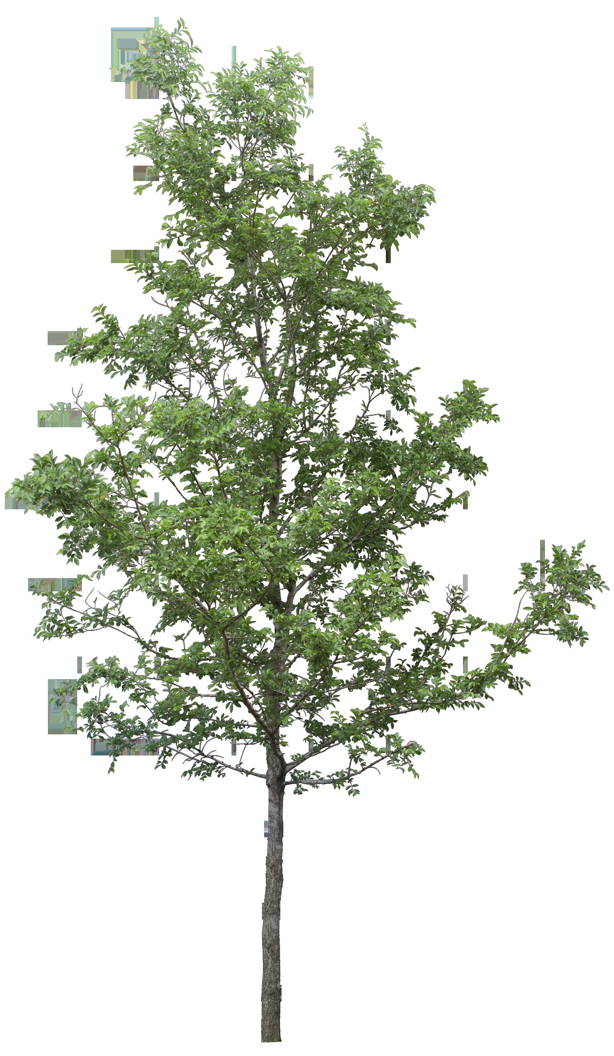 Tree DOT.