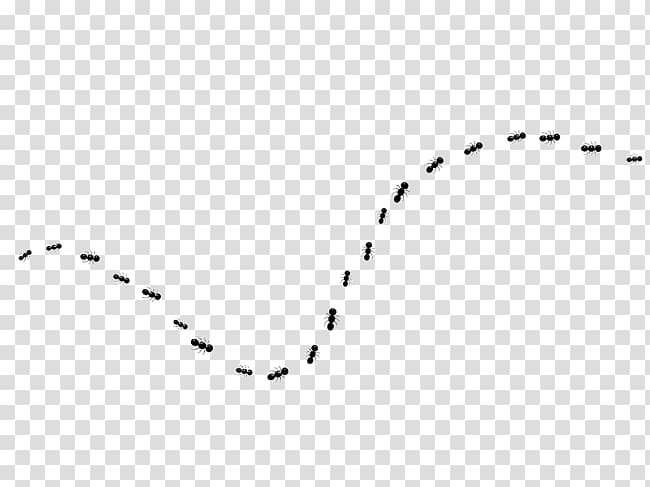 Ants forming line, White Black Pattern, line,dotted line.