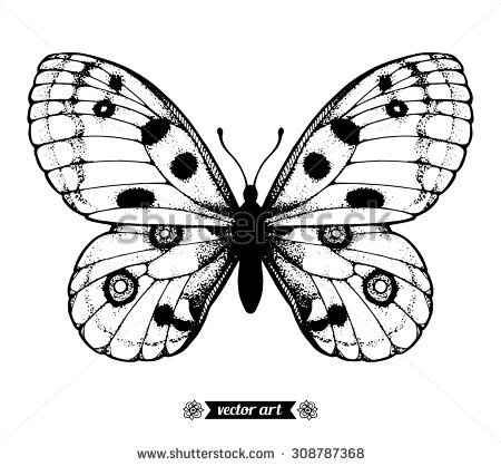 Butterfly Vector Hand Drawn Insect Sketch Stock Vector 499814695.
