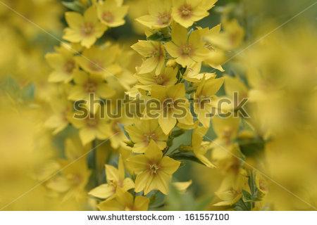 Gardenflower Stock Photos, Royalty.