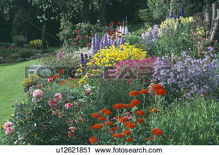 Stock Photography of Pink roses and red lychnis with blue.