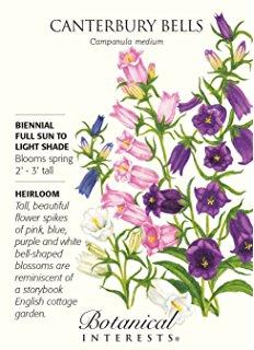 Amazon.com : Sweet William Double Blend Seeds : Flowering Plants.
