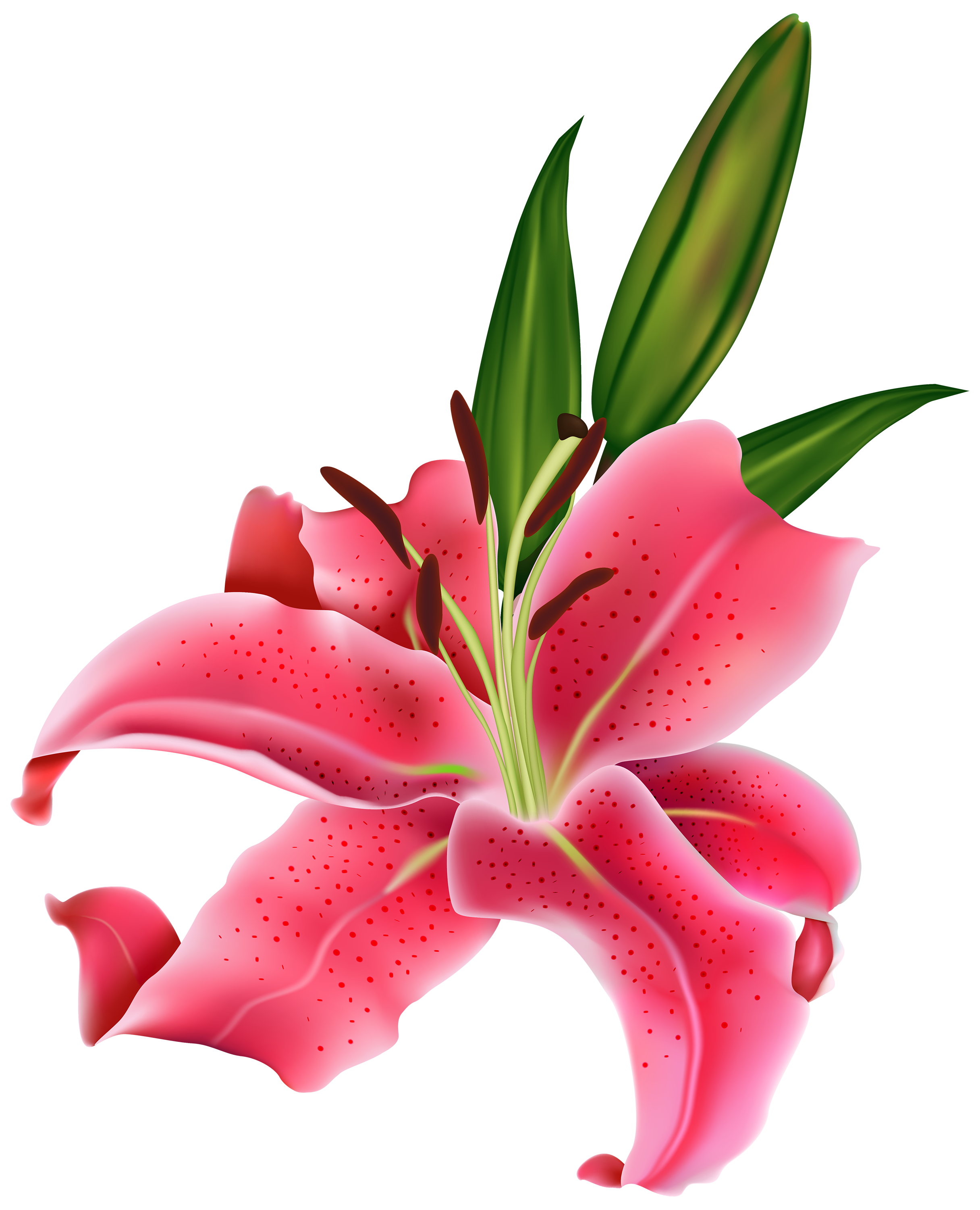 free clip art lily flowers - photo #7