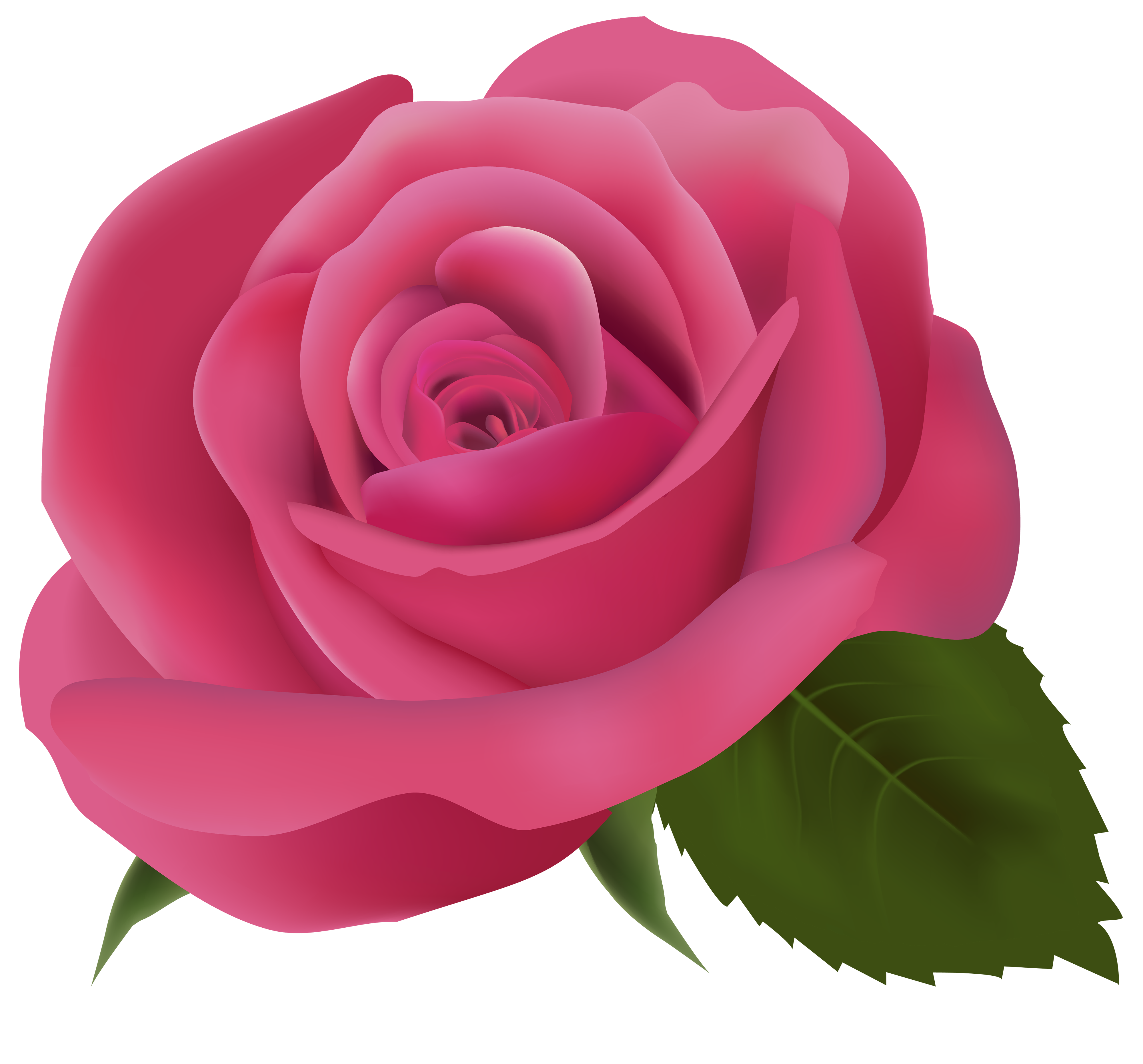 Pink Rose PNG Clipart Image.