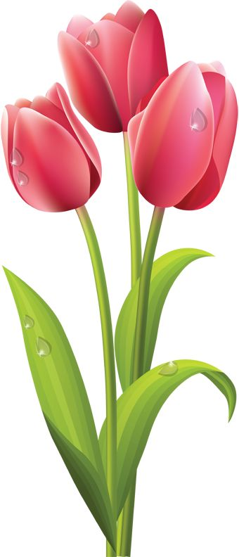 1000+ ideas about Tulips Flowers on Pinterest.