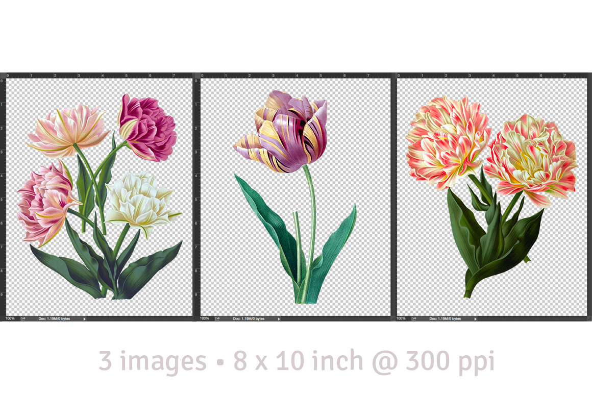 Double tulips clipart #3