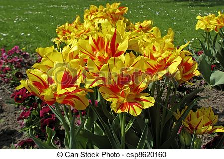 Double tulips clipart #12