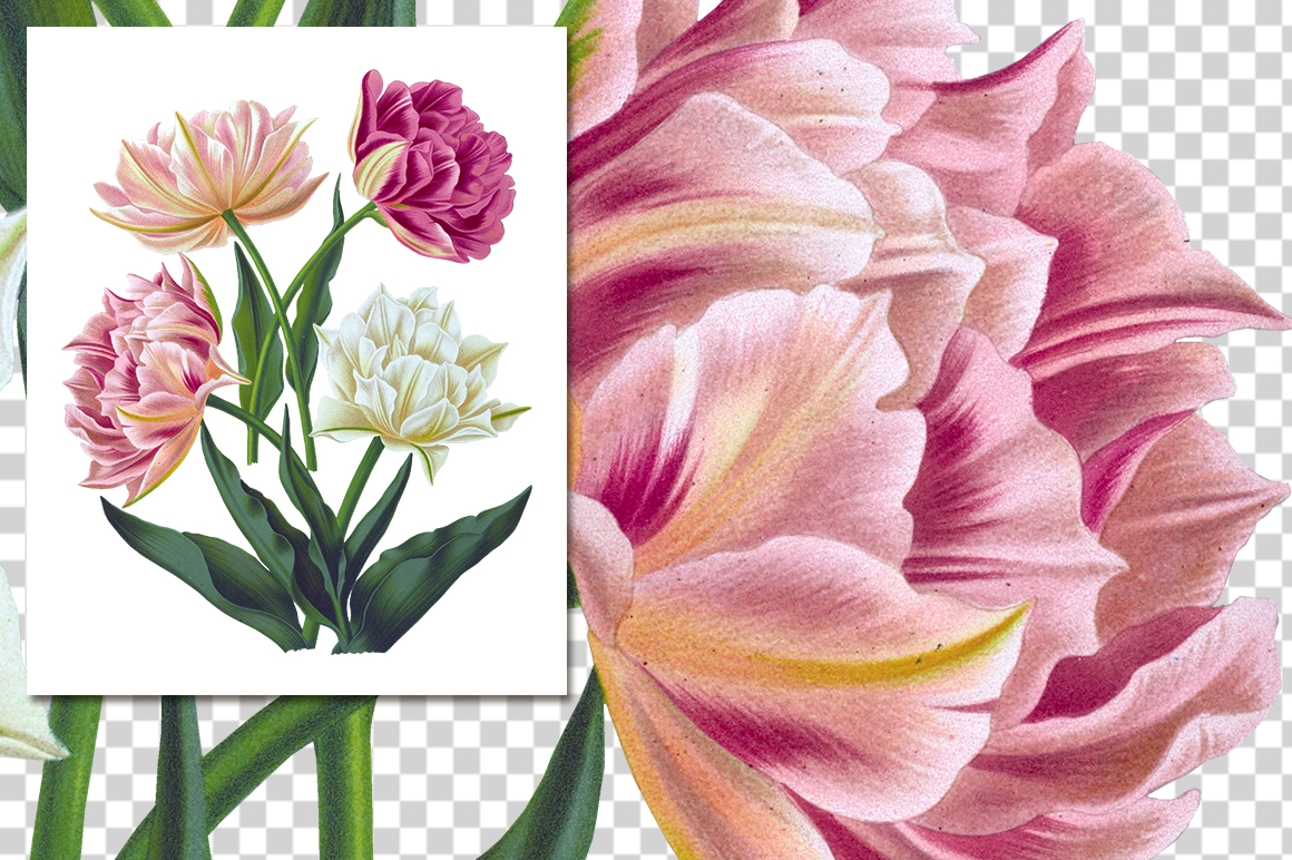 Vintage Flowers: 3671 Double Tulips by Enliven Designs.