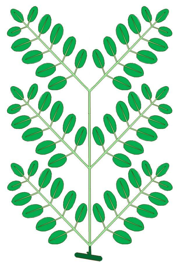 The Difference Between a Simple and Compound Tree Leaf.