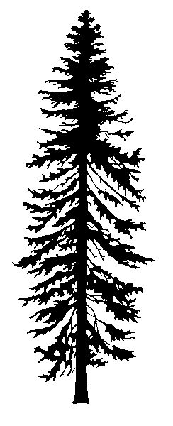 Hemlock Clipart Transparent Silhouette Clipground