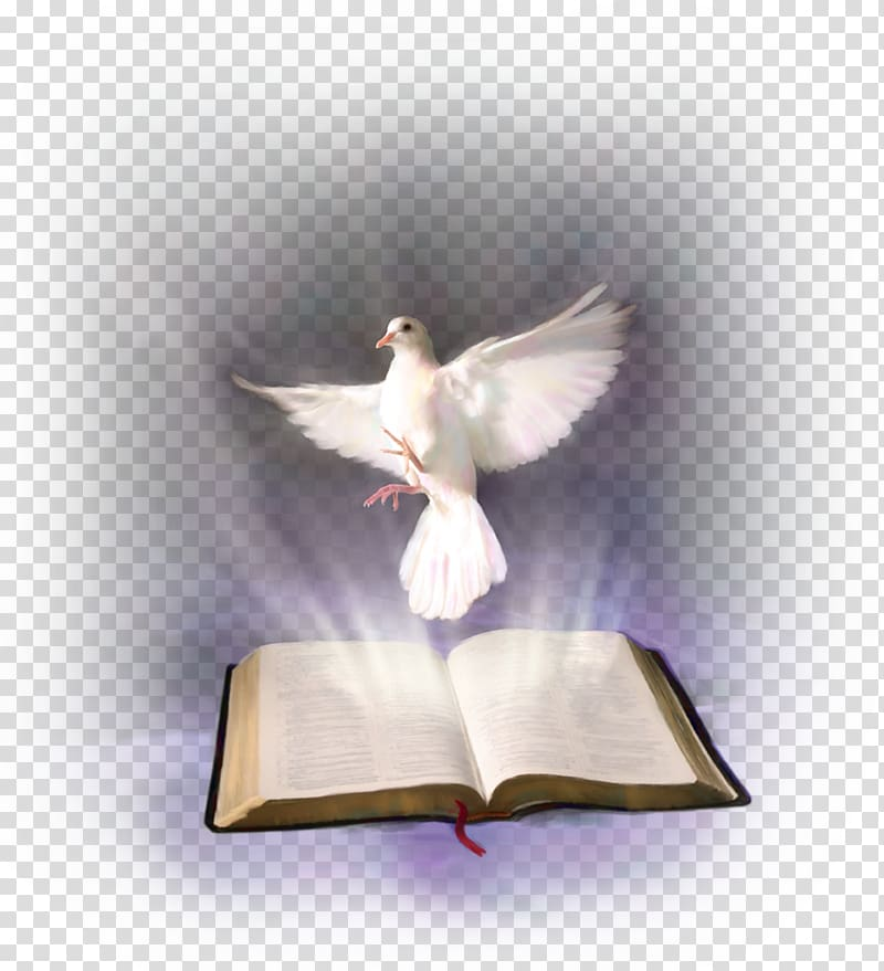 White pigeon and opened book illustration, Bible Holy Spirit.