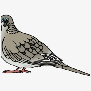 Mourning Dove Clipart Peace.