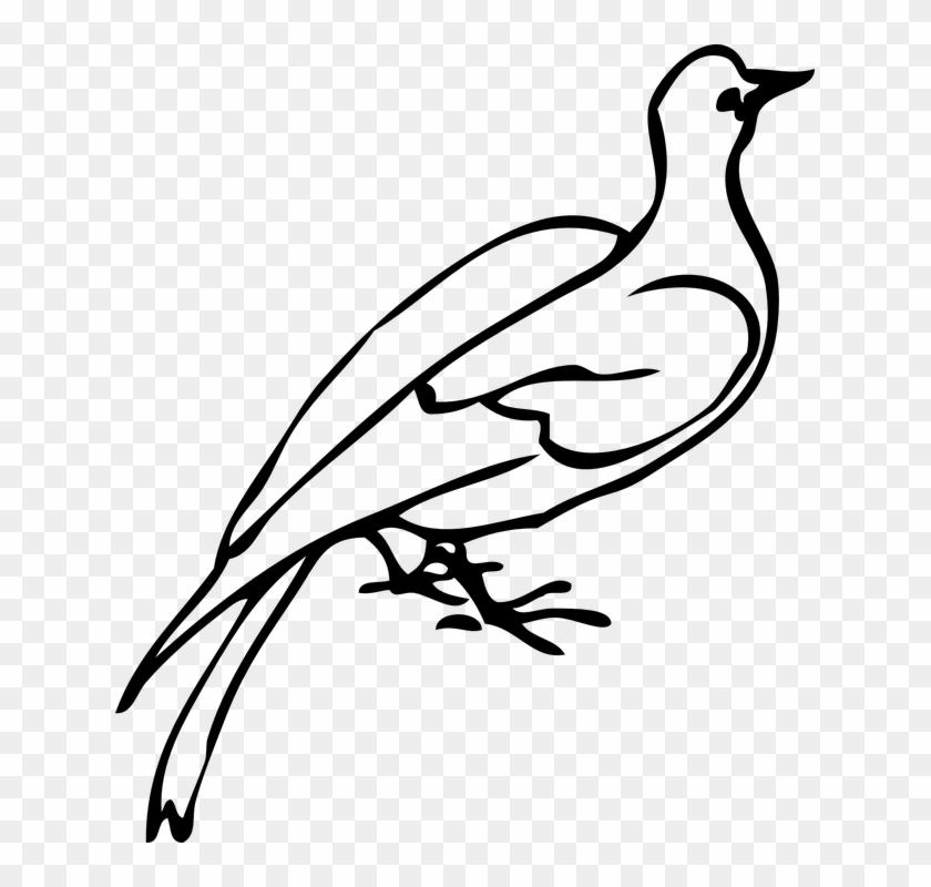 Dove Clipart Freedom Bird.